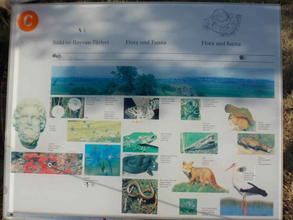 Figure 7. Flora and Fauna of Troy. The small text describes the name of each species in Turkish, German, and English. A description of the historical context of these species (rather than just these generic photographs) would improve this sign.