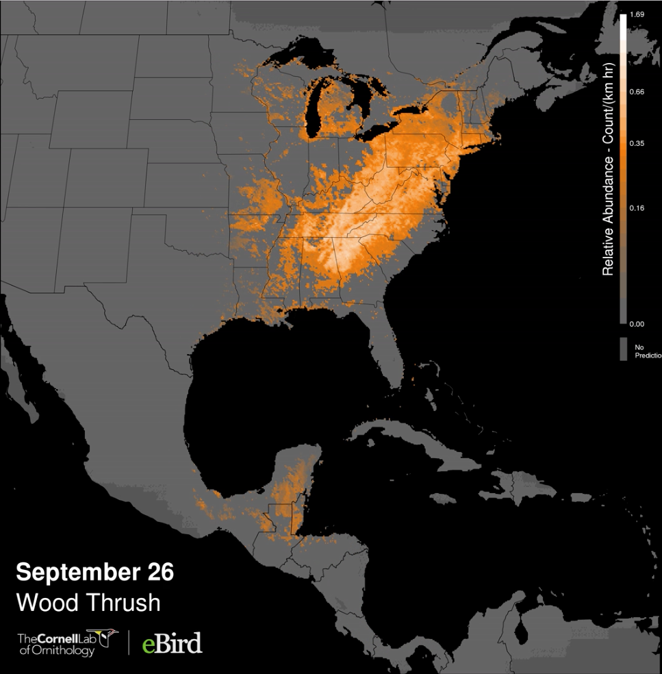 View of Visualizing Bird Migration with Animated Maps | Cartographic