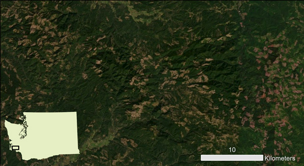 Figure 7. Commercial forest in various stages of growth in southern Pacific County. This image includes parts of areas 3 and 4 from Figure 6. Source: Esri Imagery basemap.