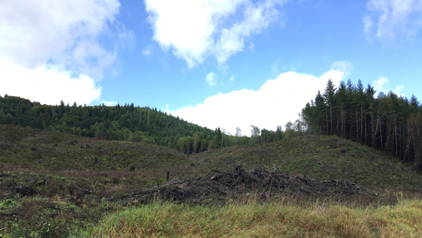 Figure 8. Clear-cut and other managed forest land in different stages of growth, Pacific County. Photo by author.